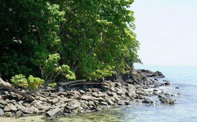 大连旅顺蛇岛真的有蛇吗,未解之谜